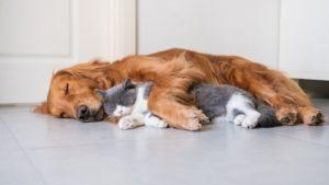 透析治療を行う犬