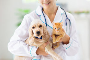 犬猫の透析治療の予防
